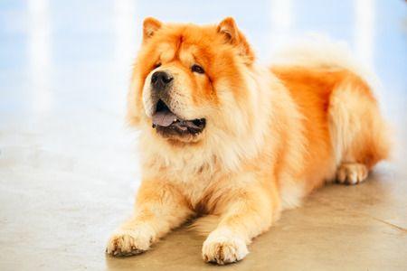 PES / DOG